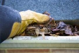 we clean out gutters and do fall maintenance